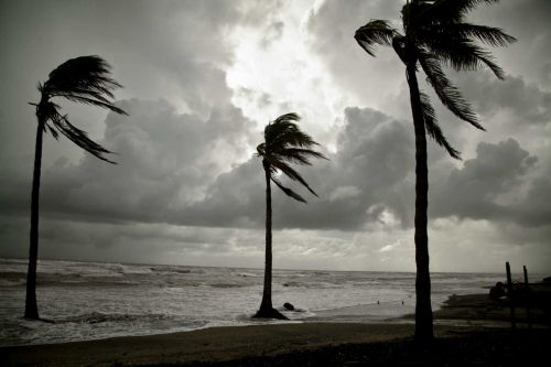 palmeras-24020-27829