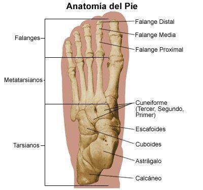 De pies, dedos y uñas – De fútbol y de la vida